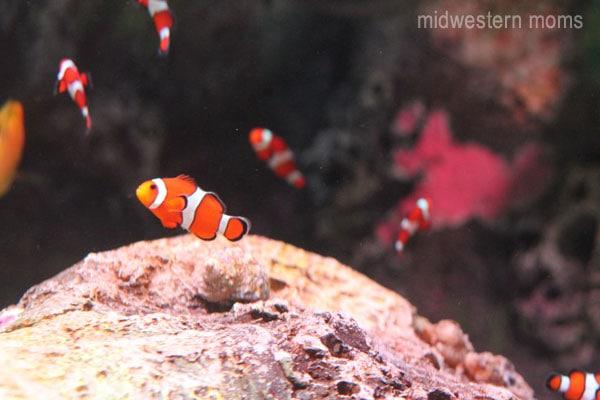 midwest travel kansas city sea life aquarium. Black Bedroom Furniture Sets. Home Design Ideas