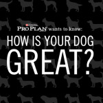 How Is Your Dog Great? #GreatDogContest