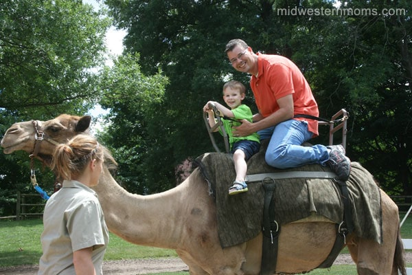 Camel Ride at Grant's Farm