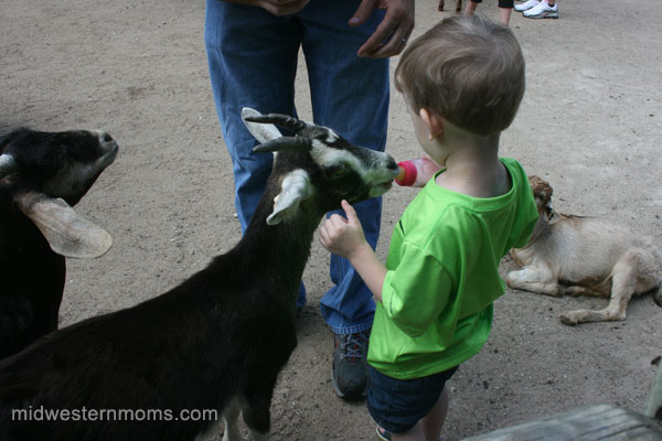 Feeding the Goats at Grant's Farm