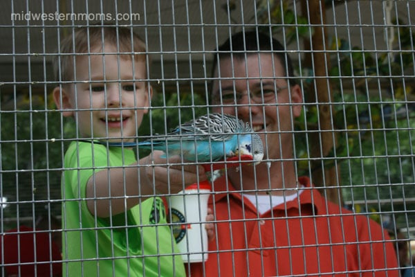 Feeding the Parakeets at Grant's Farm