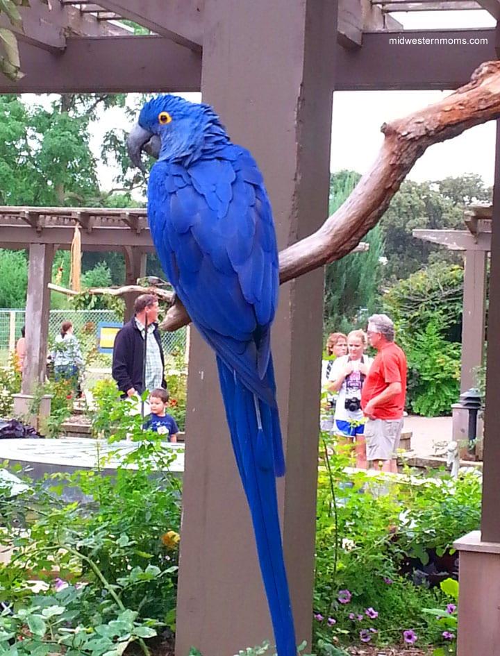 Bird at the Henry Doorly Zoo in Omaha, NE