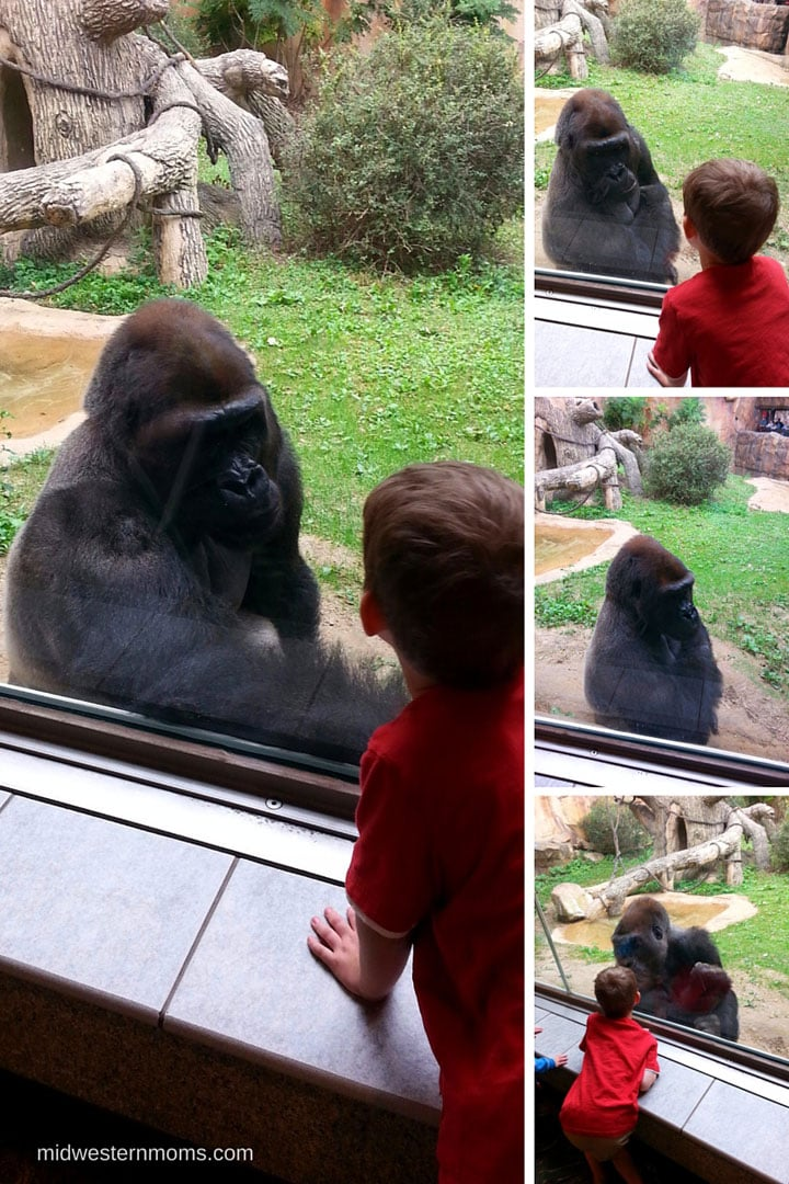 Having a conversation with the gorilla at the Henry Doorly Zoo in Omaha NE