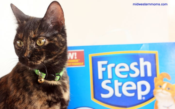 My cat is loving the new Fresh Step with the power of Febreze