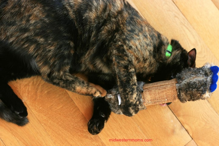 Miss Kitty enjoying her new Jackson Galaxy toys