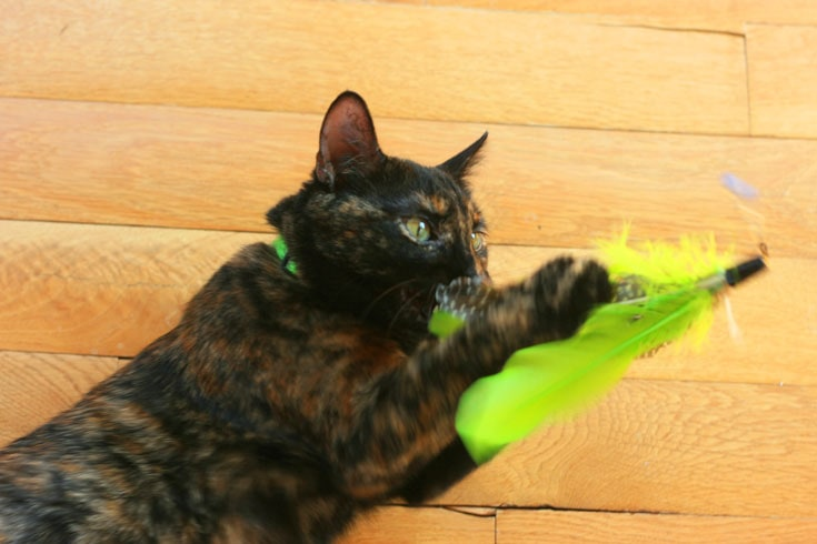 Kitty loving her Jackson Galaxy toys!