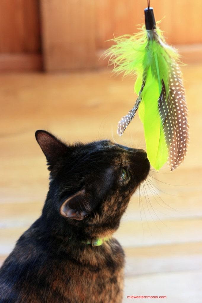 Galaxy Jackson Cat Toys