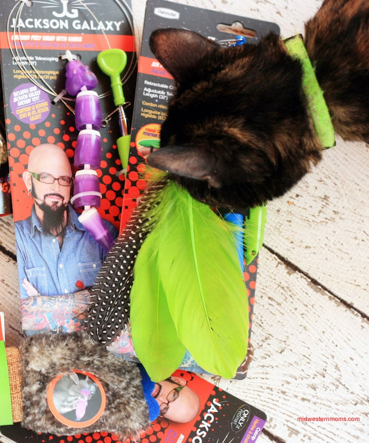 Engaging cat s natural instincts with jackson galaxy cat for Jackson galaxy ground prey wand