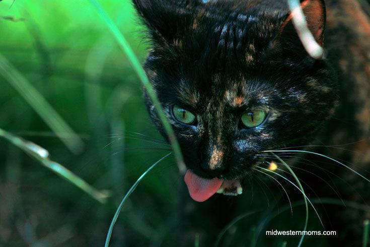 Miss Kitty enjoying an outing