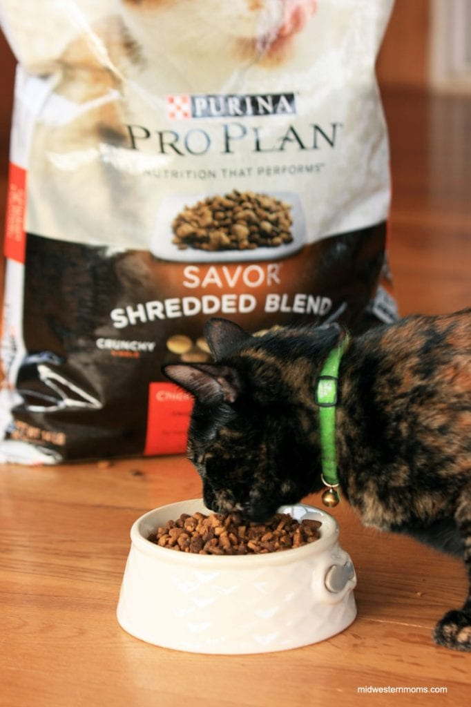 Miss Kitty loves her Purina ProPlan Cat Food!