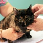 Important Reasons To Take Your Cat To The Vet – #Cat2VetDay