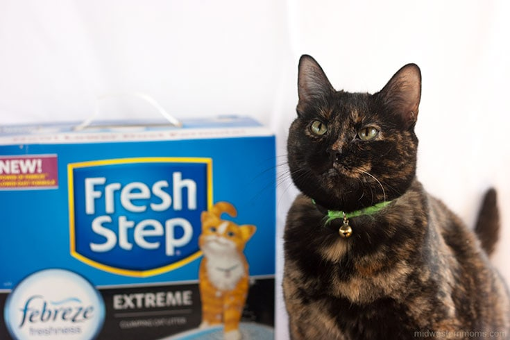 Miss Kitty approved Cat Litter!
