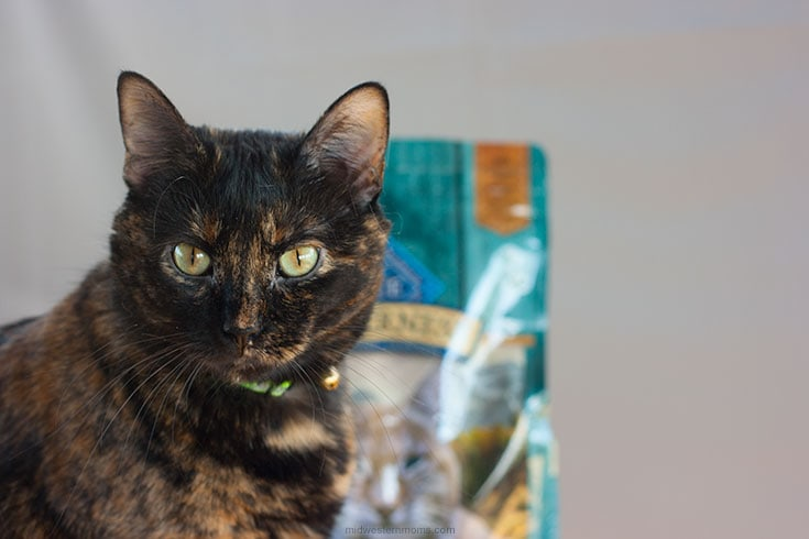 Miss Kitty with her Blue Buffalo Cat Food