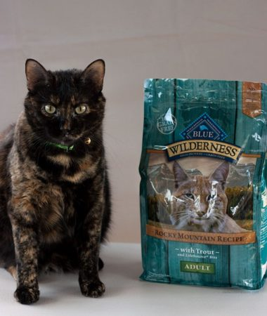 Miss Kitty with her Blue Buffalo Blue Wilderness cat food.