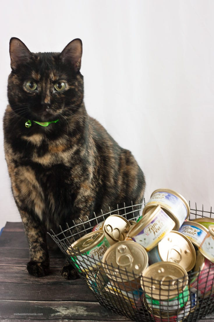 It is time to stock up and save on Fancy Feast and Friskies at PetSmart! Your cat will thank you!