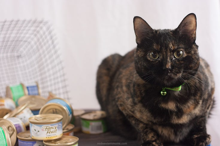 Stock up and save on Fancy Feast at PetSmart