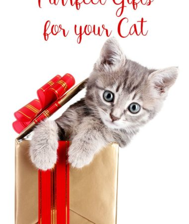 Purrfect gifts for your cat