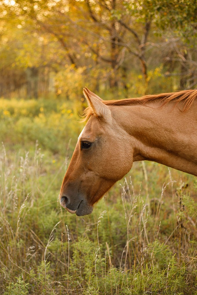 Sawyer Horse