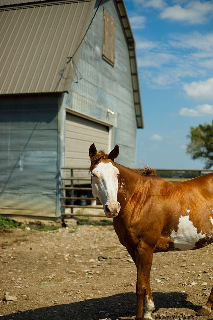 Dalebanks horse
