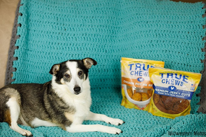 Dog with True Chews Dog Treats