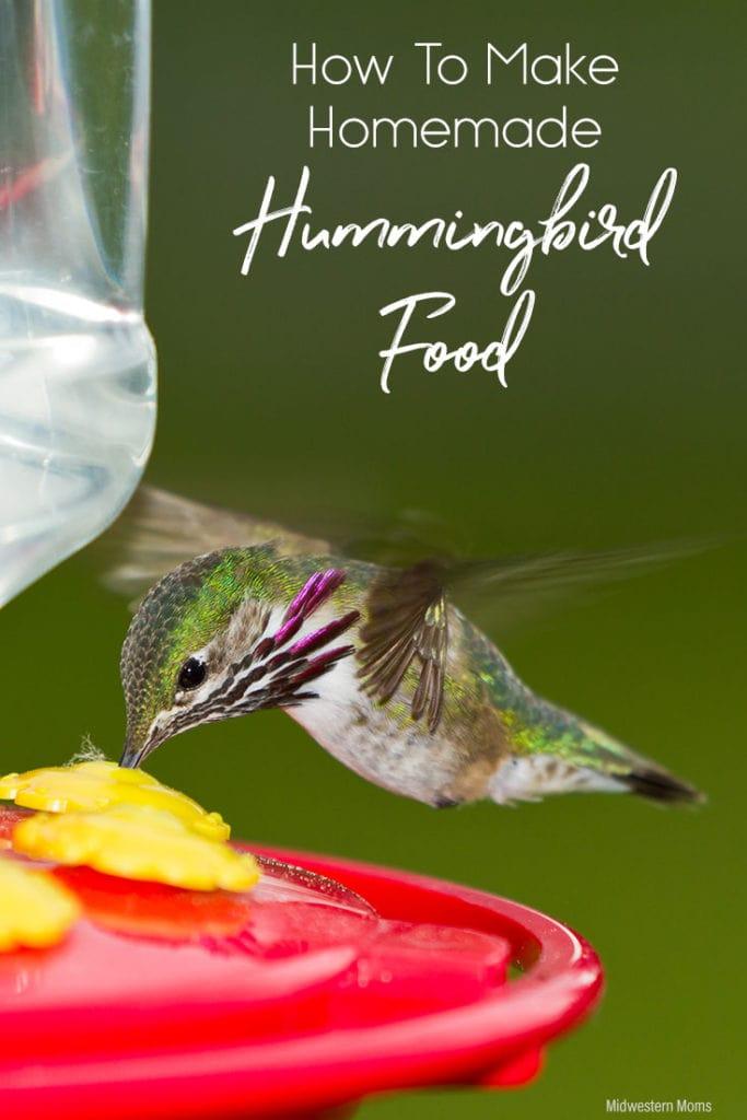 Hummingbird drinking from a feeder.