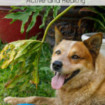 Ways To Keep Your Dog Active And Healthy