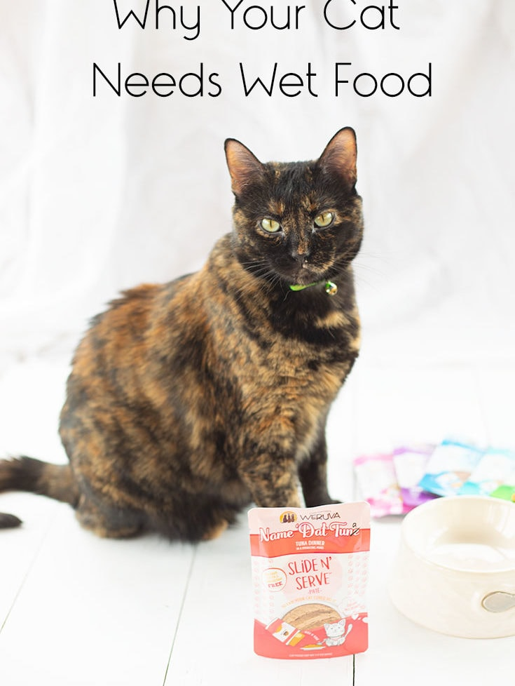 Miss Kitty siting pretty with her pouch of Weruva Slide N' Serve Wet Cat Food and her Food Dish.